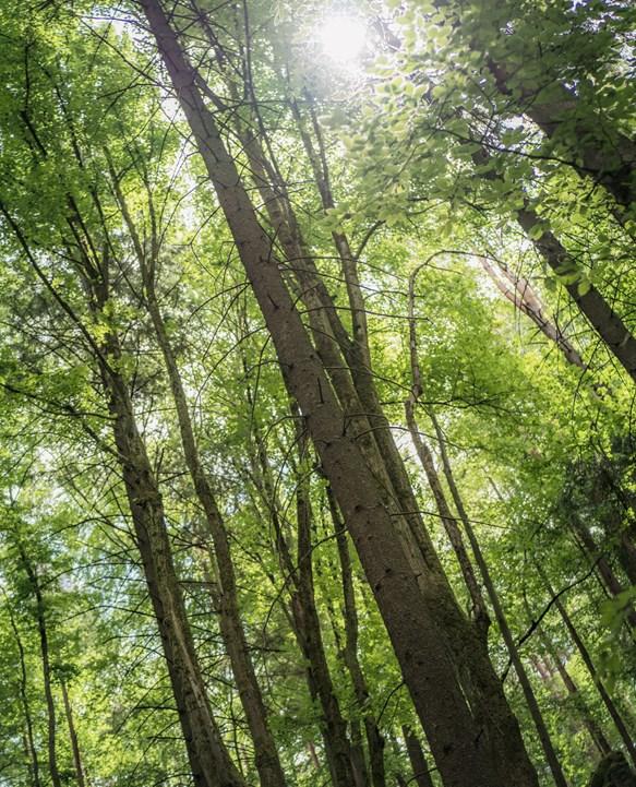Bæredygtighed - Læs om bæredygtige initiativer