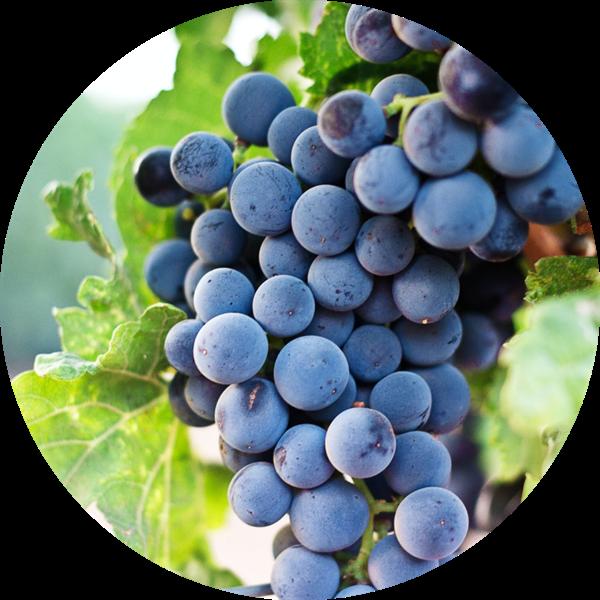 Vin Iltning